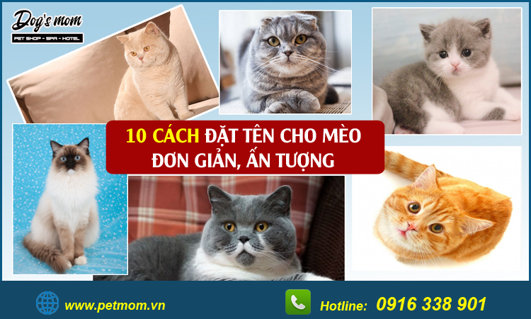 Cách đặt tên cho mèo